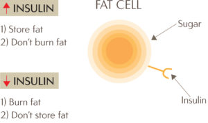 fatcell1